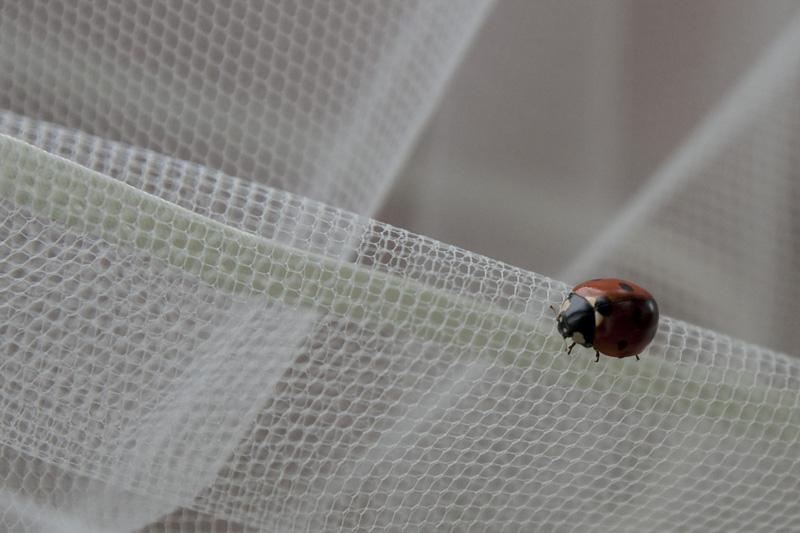 Lieveheersbeestje voor geluk op je trouwdag :-)