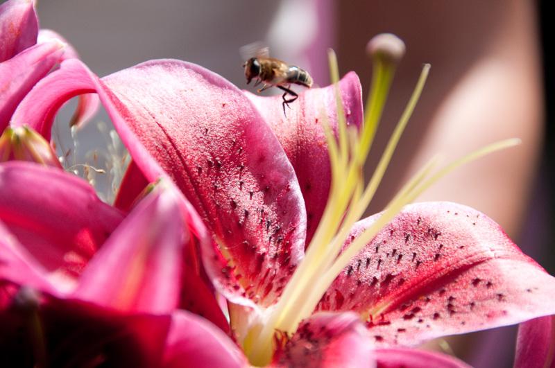 Bruidsboeket trekt insecten aan :-)