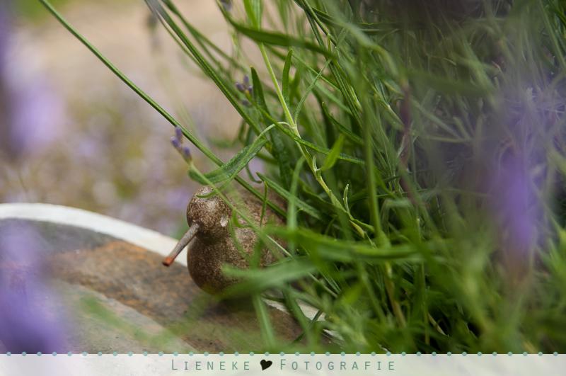 Vogeldrinkbakje tussen lavendel