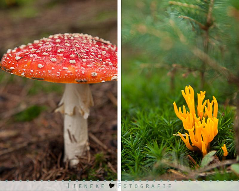Vakantie Ardennen herfst paddestoel