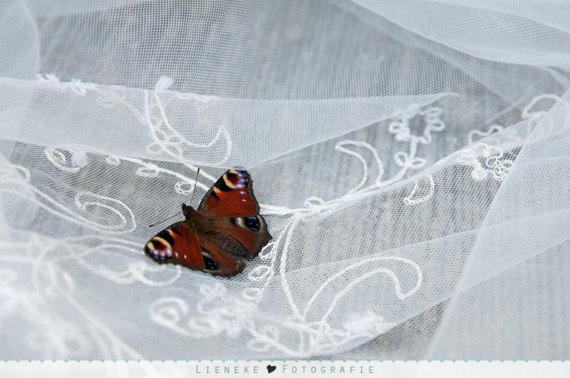 Vlindergroet bruiloft
