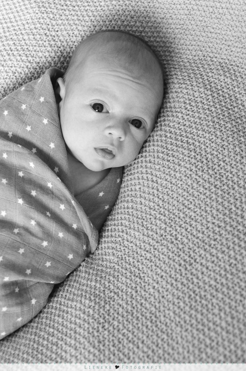 newbornshoot Moordrecht