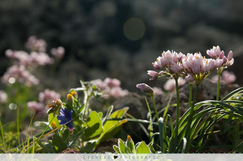bloemen lanzartoe