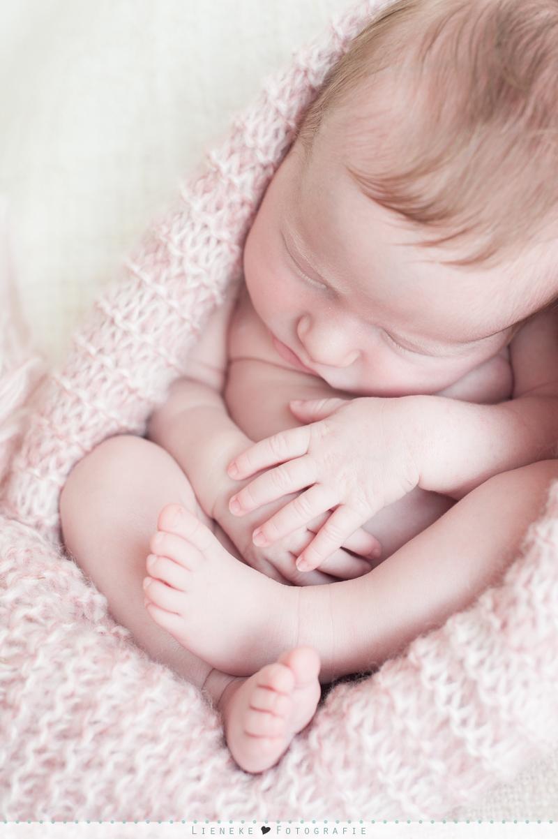 newborn fotoshoot Nieuw Vossemeer