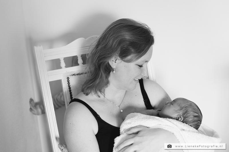 newbornshoot berkel en rodenrijs